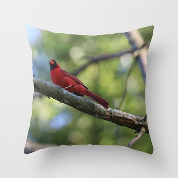 Cardinal Series III Throw Pillow by Theresa Campbell D'August Art