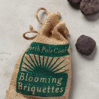 Coal Briquette Seed Bombs by Anthropologie Green One Size Garden
