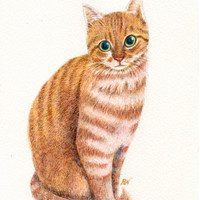 "cat drawing art print  ""A Sweet Ginger ""  yellow tabby cat lover gift wall room dorm decoration (118)"