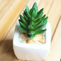 Succulents Artificial Green Plants