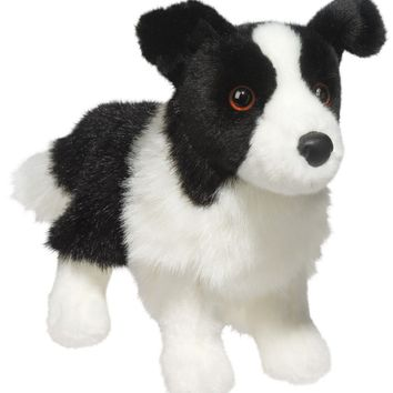 Zippy Border Collie