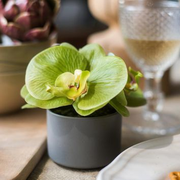 Rustic Mini Real Touch Potted Orchid in Green