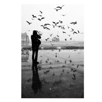 Black and white photography, winter photography,istanbul photography, Art photography, Bird photography, snow photography, gonulk,
