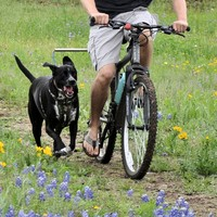 WalkyDog Plus® Bike Leash | Walky Dog Bike Leash | Bicycle Dog Leash | Bike With Your Dog | Dog Bike Accessory - The Dog Outdoors
