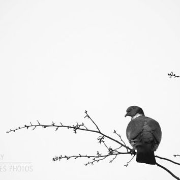 Bird canvas art, black and white wall art, minimalist canvas, animal photography, fine art photography, bird in tree, home decor, monochrome