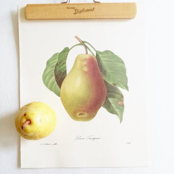 5 Vintage Fruit Book Plates Redoute Art Wall Hangings French Script Pear Pomegranate Orange Fig Hazel Nut Botanical Prints