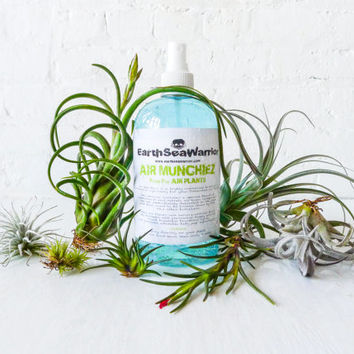 Air Munchiez - Fertilizer for Air Plants - Large 16oz Bottle - Care Instructions & FREE GIFT Air PLANT - New Package Fresh Formula!