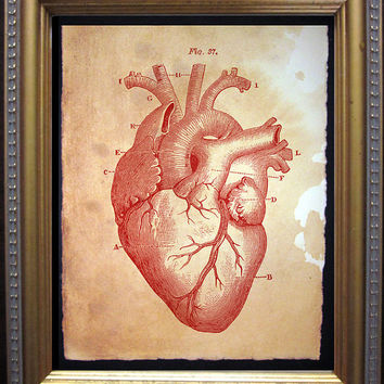 Heart Diagram Art Print - Vintage Anatomy Art Print- Vintage Art Print on Tea Stained Paper
