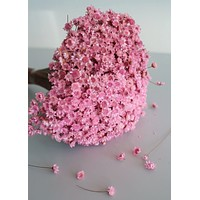 Dried Star Flower Bundle in Pink - Approximately 3 oz Bunch