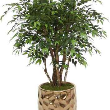 4' Ruscus Tree In Large Burnt Gold Gabi Planter