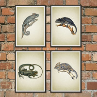 Set of 4 prints, Chameleon Prints, Vintage Chameleon Book Plate Illustration, Reptile Art, Lizard Print, Tropical Animal, Chameleon Art *4*