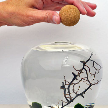 Terrarium // Marimo Aquarium // Glass Vase // Cork Ball Stopper // Home Decor