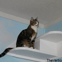Corner Cat Stair with Carpet from The Vertical Cat