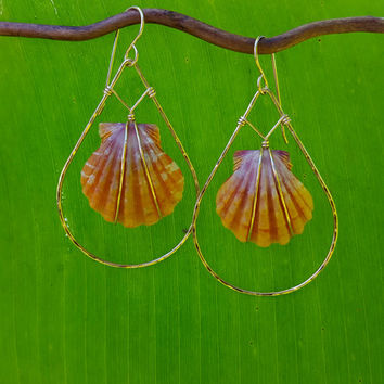 Sunrise Shell earrings, Large sunrise shells, orange and pink shell jewelry, 14K gold filled, big earrings, Hawaii shells, shell jewelry