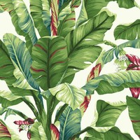 York AT7068 Tropics Banana Leaf Wallpaper