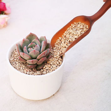 Mini Soil Shovel Spoon Perfect Succulents Cactus Miniature Potted Planters Handy Teaspoon Gardening Tool or for Bird Animal Food Feeding