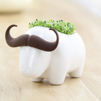 White Buffalo Mini Ceramic Pot