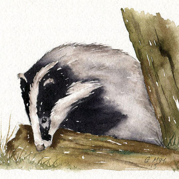 Watercolour sketch - Snuffling Badger