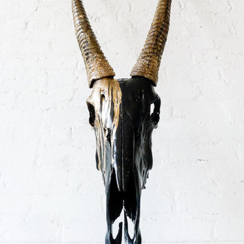 Real Gemsbok Oryx Skull - Huge 4ft Animal Skull - Gold Painted Details - Home Office Library Study Luxury Addition - African Wall Trophy