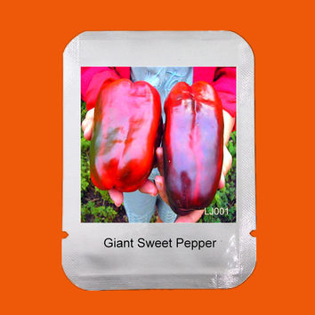 Professional Packaging, garden plant chilli seeds vegetable,100 Pcs Extra-large Organic Russian Giant Sweet Pepper Seeds, #LJ001