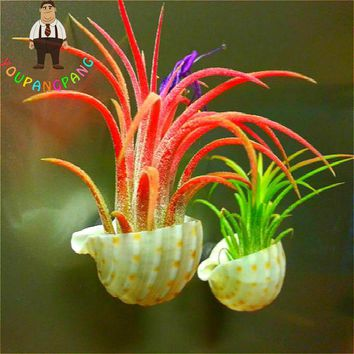 2017 New Arrival Youpangpang Air Plant Seeds 100pcs Cactus Jardin Bonsai Plants Rainbow Grass Seed For Garden Sementes