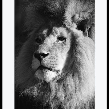 Large Lion Print, Lion Wall Art, 12x16 Print, Black and White Wall Art, Animal Print, Lion Photo, Children's Room and Nursery Art