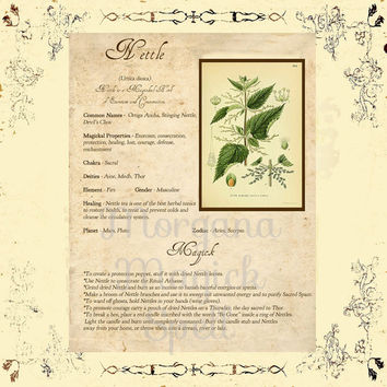 MAGICK HERB NETTLE, Digital Download,  Book of Shadows Page, Grimoire, Scrapbook, Spells, White Magick, Wicca, Witchcraft, Herb Magic