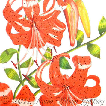Orange Tiger Lily Original Drawing in Pen and Colored Pencil