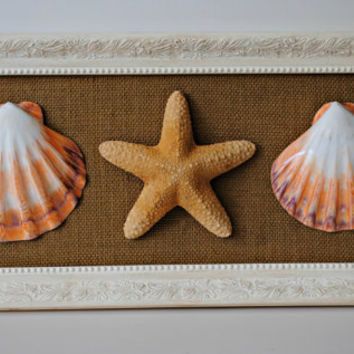 Coastal Decor Shell Wall Art with Recycled Frame - (600.4)