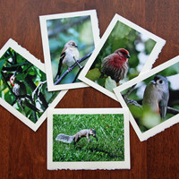 Bird Photo Note Cards Backyard Bird Cards Squirrel Stationery Nature and Wildlife Photo Note Cards