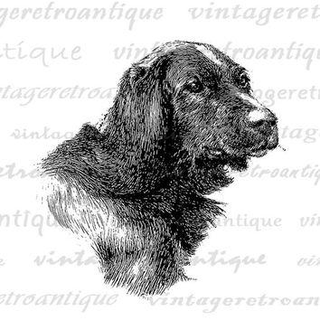 Printable Digital Irish Setter Dog Download Illustration Graphic Image Vintage Clip Art Jpg Png Eps  HQ 300dpi No.3176