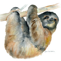 Sloth Watercolor
