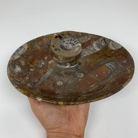 "852g, 8.75""x6.5"" Red/Brown Fossils Ammonite Bowl Oval Ring Shape @Morocco,F325"