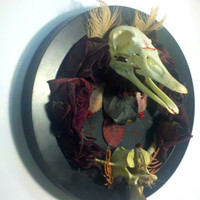 duck skull taxidermy mount with moth berries dried by resonanteyes