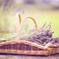 Lavender -  Day 233/365 | Flickr - Photo Sharing!