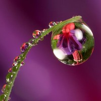 Reflective Water Drop Photography