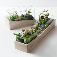 Roar + Rabbit Angled Wood Terrariums