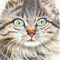 "cat drawing art print  ""A Handsome Cat ""  long hair cat lover gift unique wall room decor (119)"