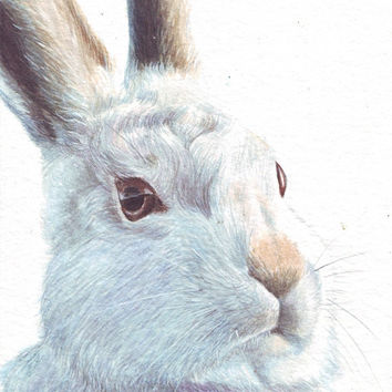 HM050 Original art watercolor painting Bunny by Helga McLeod