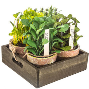 Potted Herbs Arrangement | Hobby Lobby | 1400530