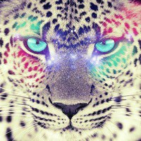 Leopard | via Tumblr - inspiring picture on Favim.com