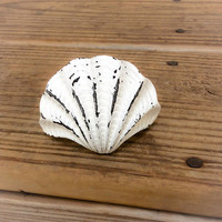 Beach Knobs ~ Seashell Home Decor ~ Nautical Pulls ~ Coastal Cabinet Knob ~ White Cabinet Knob ~ Beach Bathroom Knobs ~ White Dresser Knob