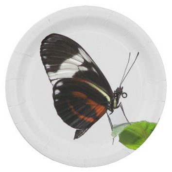 Longwing Butterfly Photo Paper Plate