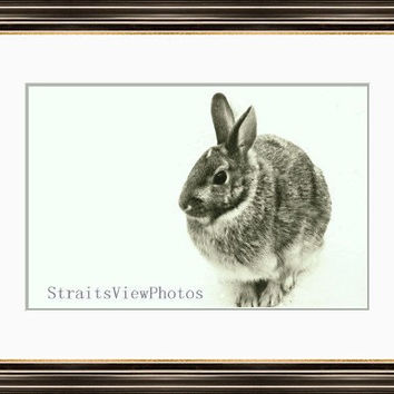 Rabbit photo, bunny photo, Easter Holiday, black and white , nature photo, animal art, Easter photos, nature decor,rustic decor, country art