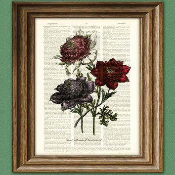 ANEMONE Flower botanical illustration beautifully upcycled dictionary page book art print