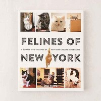 Felines Of New York: A Glimpse Into The Lives Of New York's Feline Inhabitants By Jim Tews