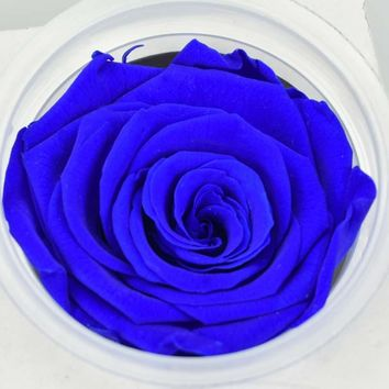 5-6CM Head Dry Natural Fresh Preserved Rose,Real Rose Eternal,Beauty And The Beast Rose For Girlfriend,Wedding Favors And Gifts