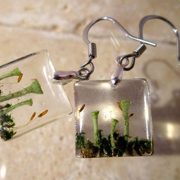 Pixie Cup Lichen (Cladonia sp.) and Dicranoweisia cirrata  earrings, Moss Jewelry, Plant Jewelry, mycology, fungi, woodland, nature