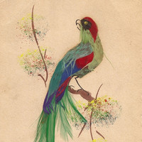 Edwardian Card Tropical Bird Real Feather Antique Stationary Made in Mexico Unique and Unusual