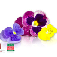 Bulk Edible Pansy Blossoms for Sale | Marx Foods